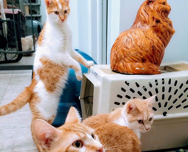 Homeward Bound Cats Adoption Center