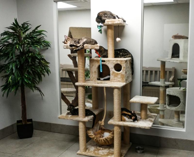 Homeward Bound Cats Adoption Center Interior